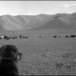 Mongolie-20